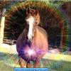 Horse Wisdom For You